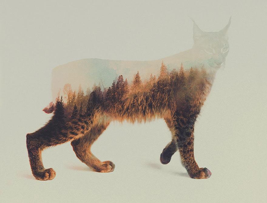 Фотографии животных с двойной экспозицей (12)