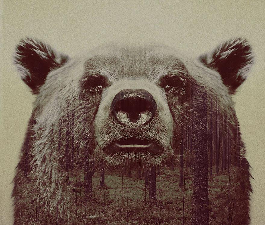 Фотографии животных с двойной экспозицей (19)