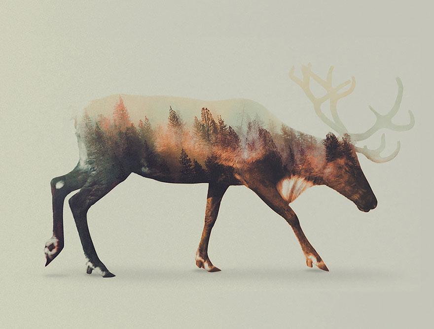 Фотографии животных с двойной экспозицей (3)
